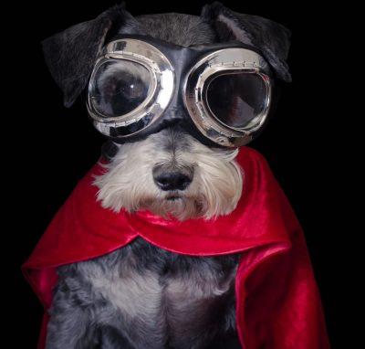 dog-goggles